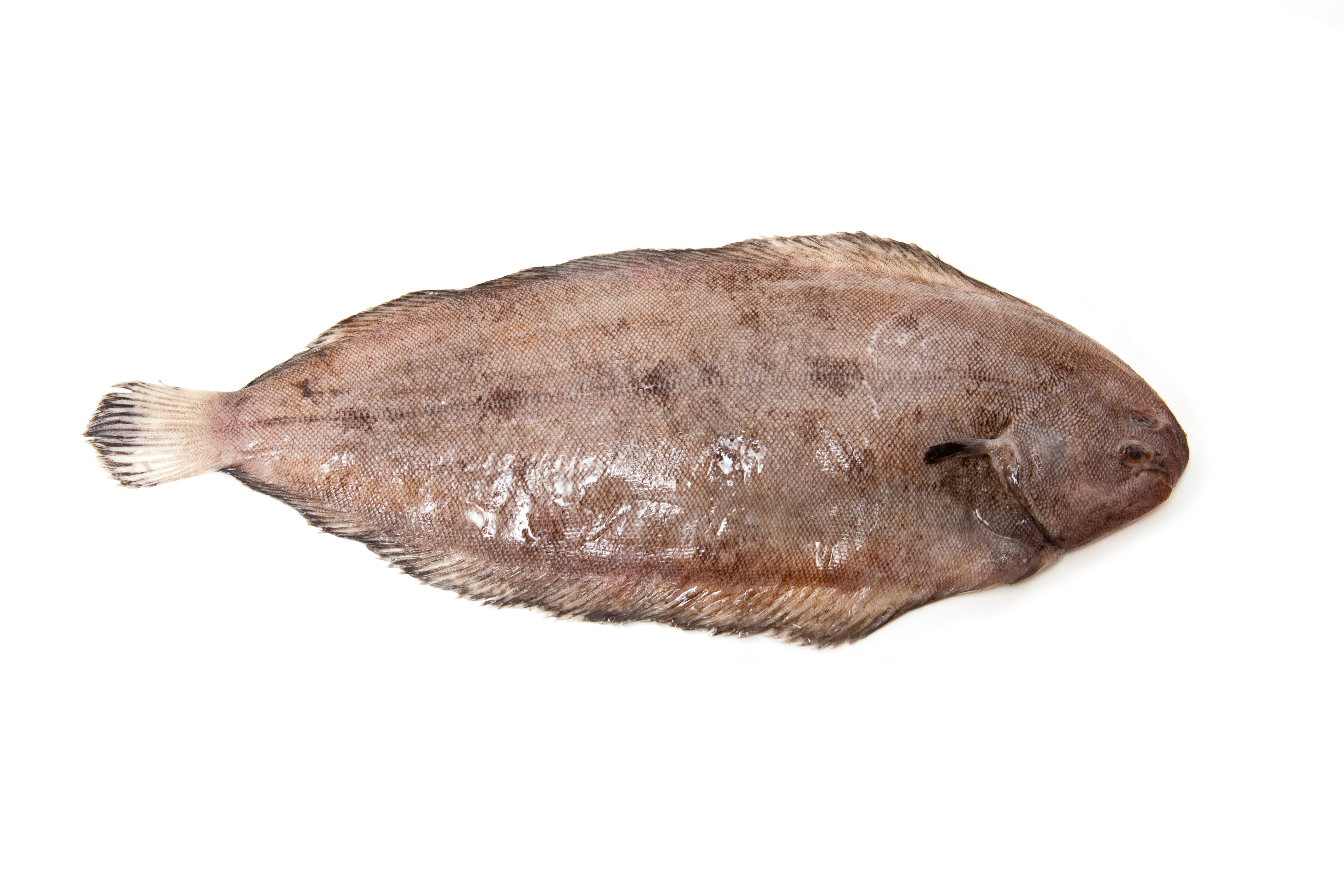 Head on gutted iqf dover sole stavis seafoods for Dover sole fish