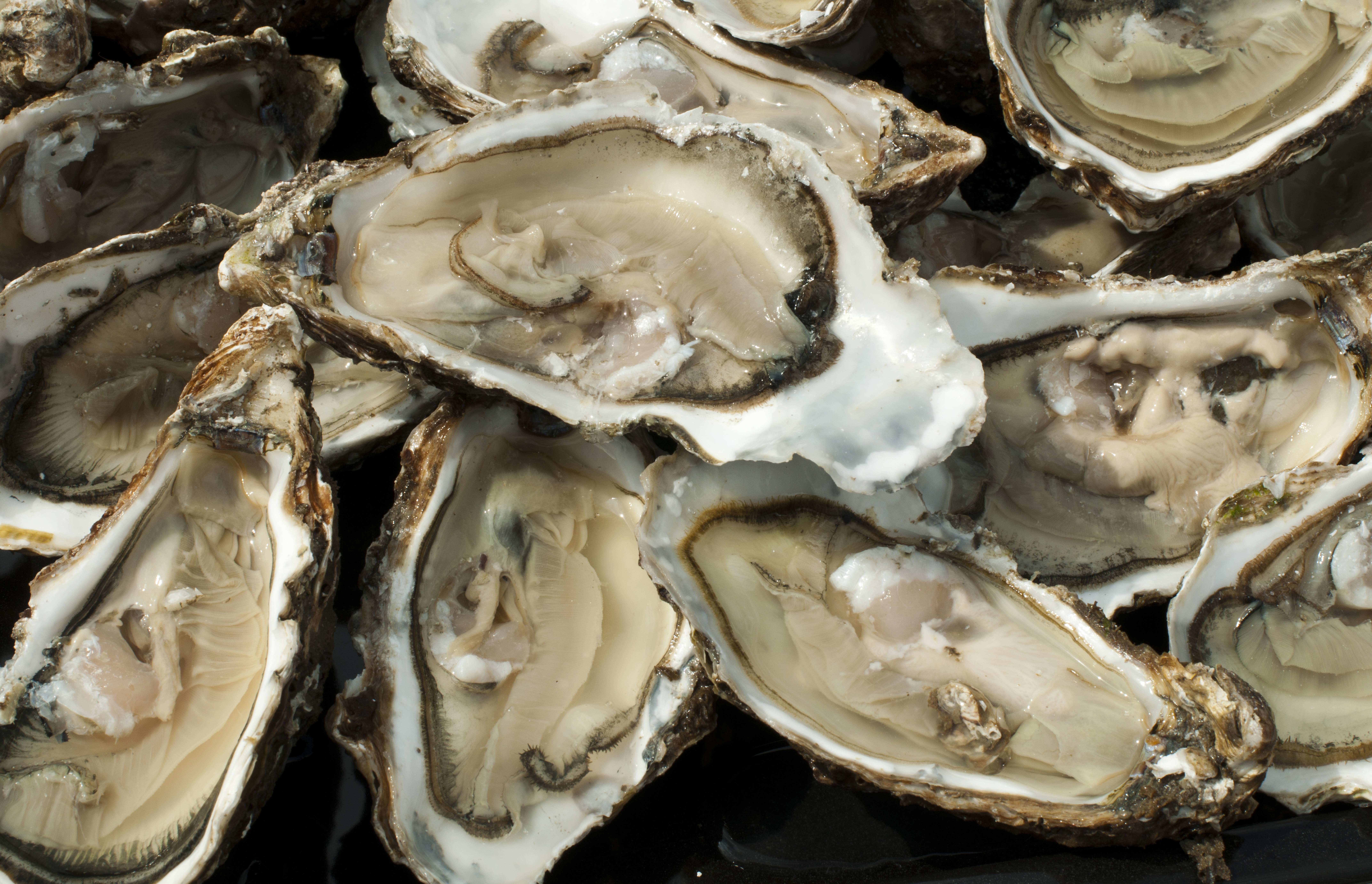 cape cod oysters