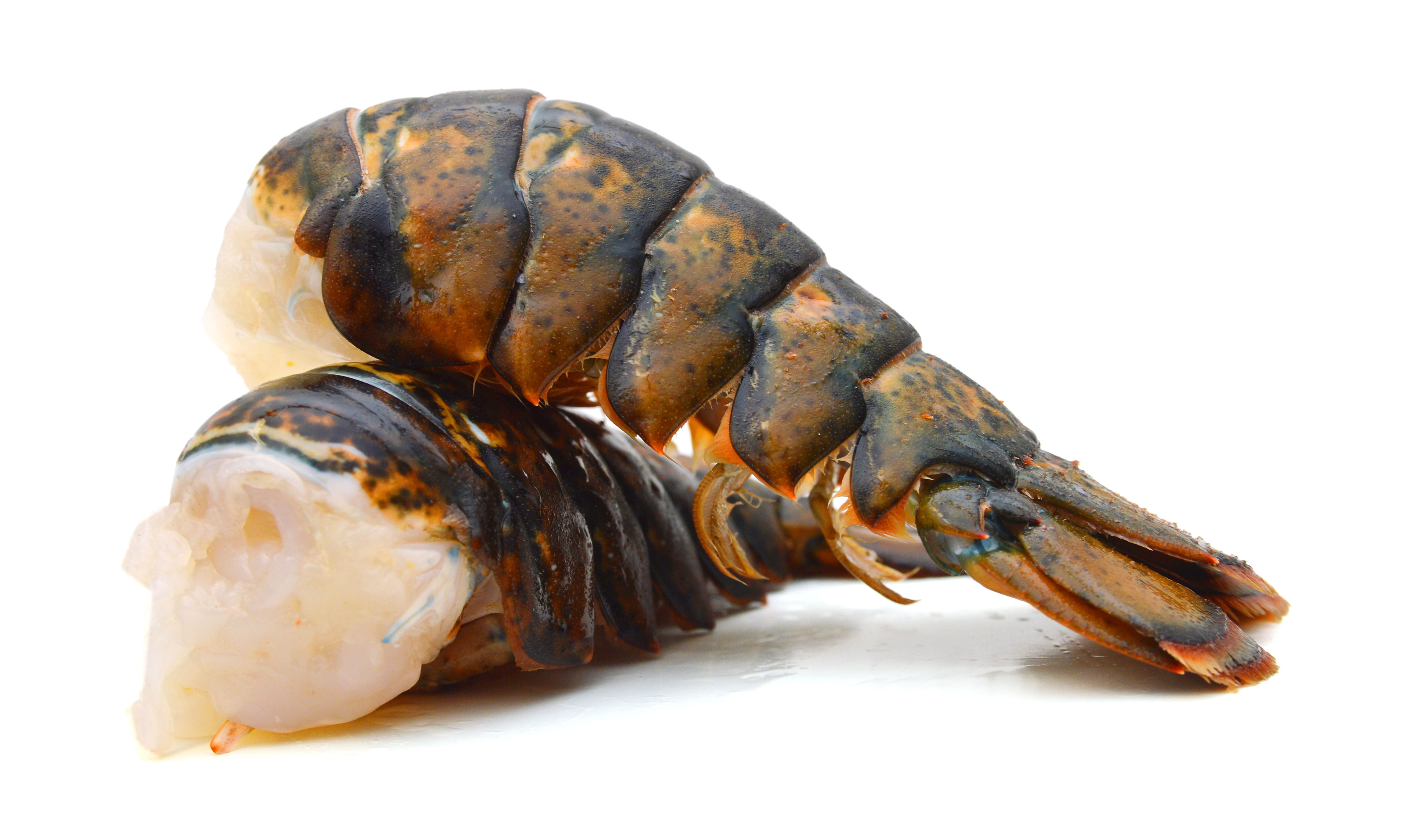 Canadian Cold Water Lobster Tails Stavis Seafoods