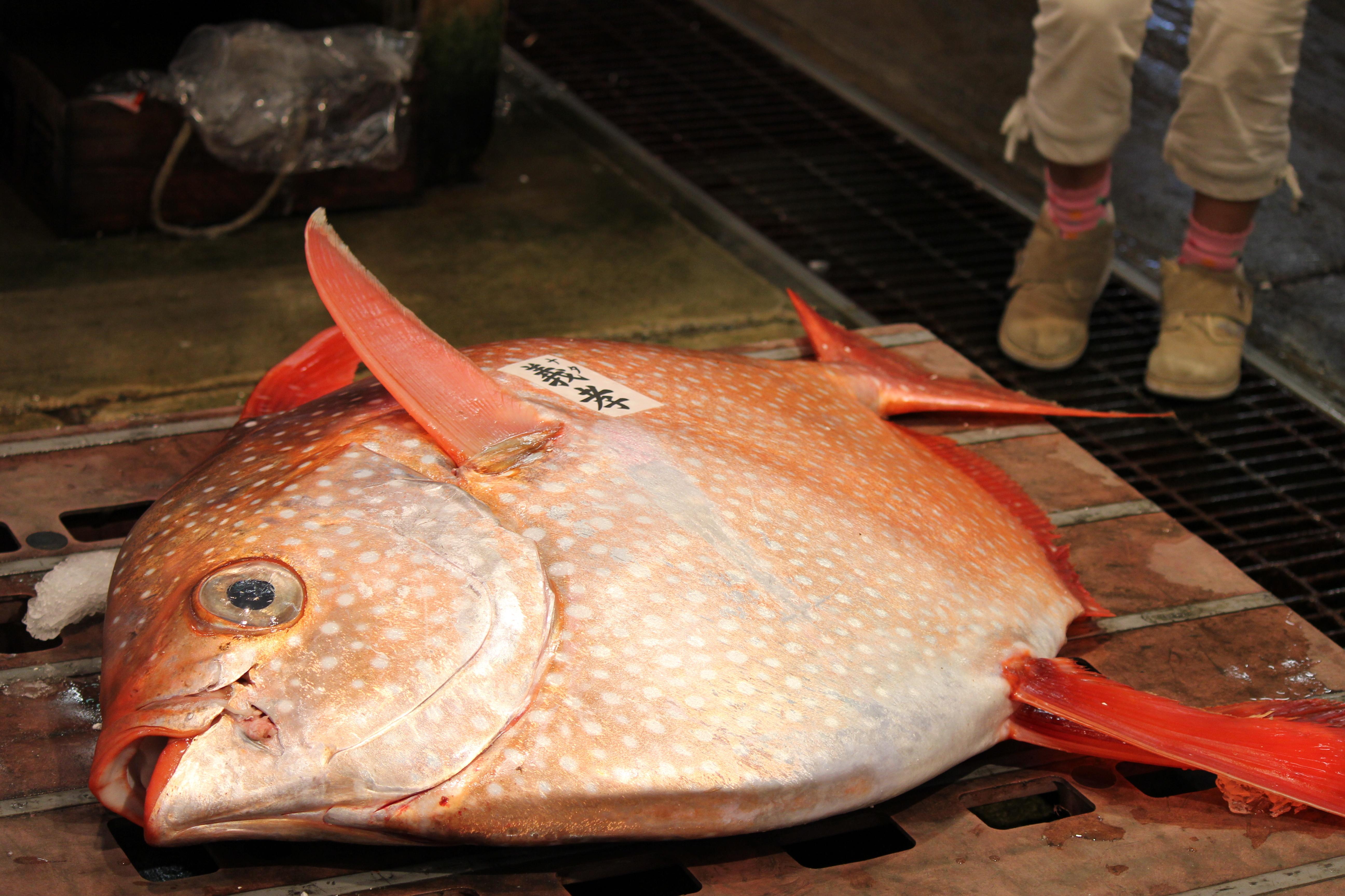 Opah Fish Recipes