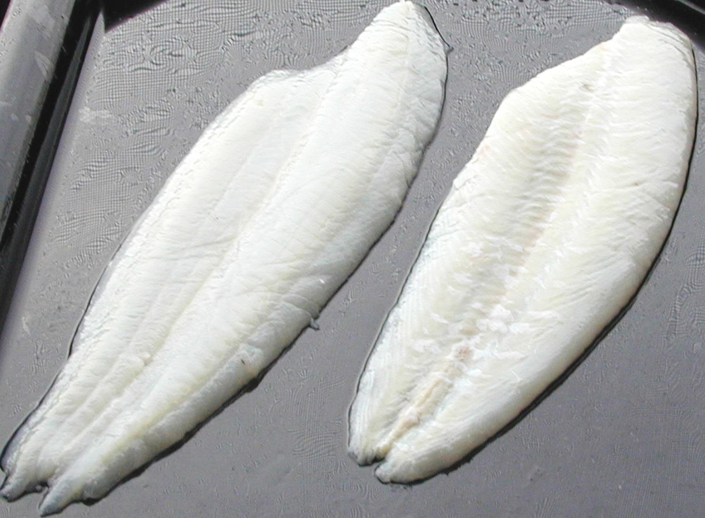 Grey Sole Stavis Seafoods