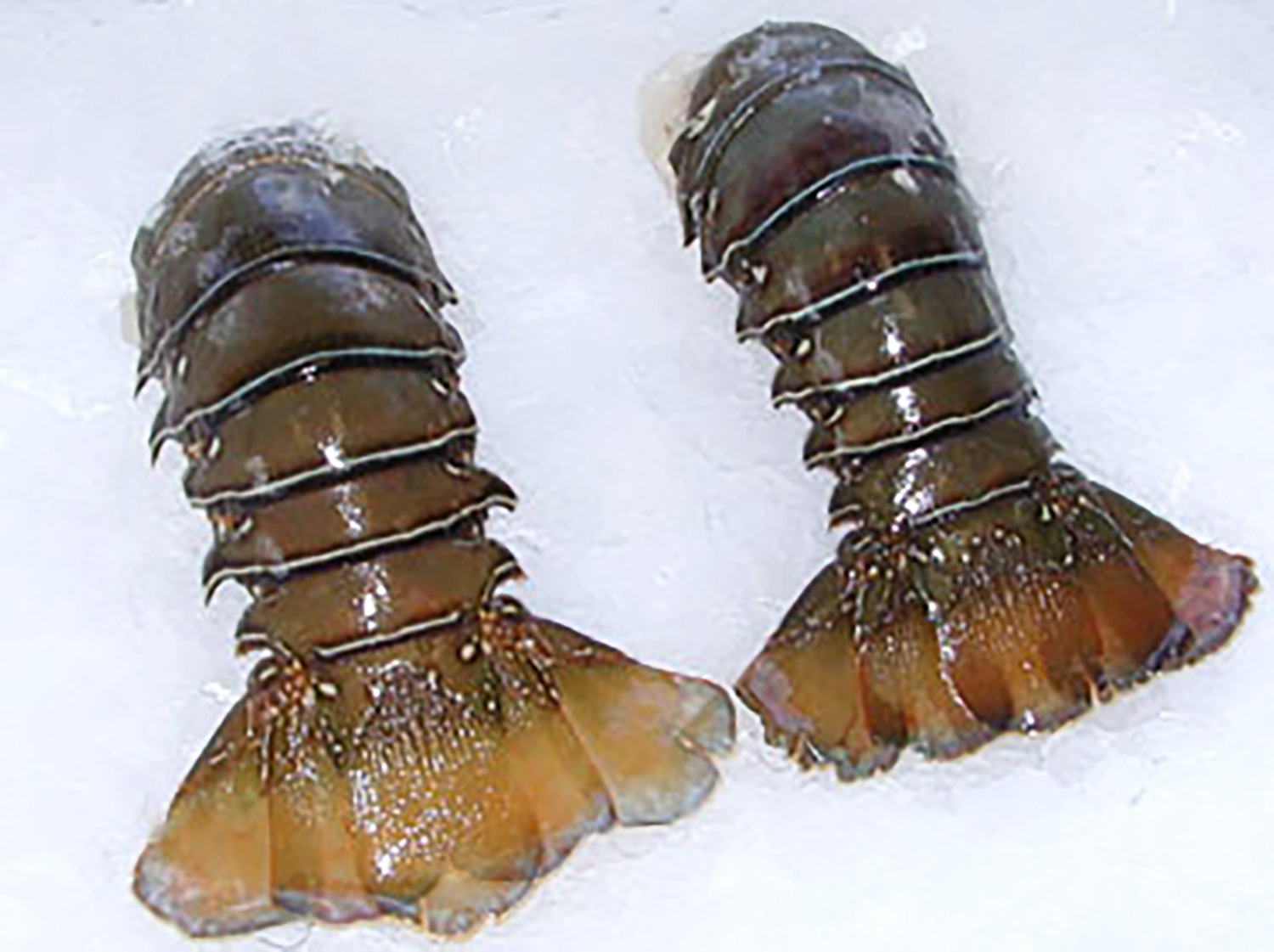 Pacific Warm Water Lobster Tails Stavis Seafoods